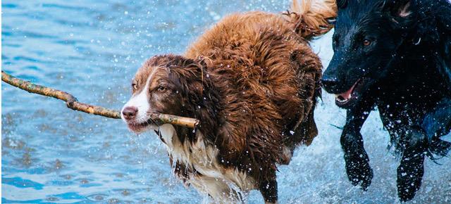 ¡Garantiza la seguridad de tu mejor amigo con un seguro para mascotas!