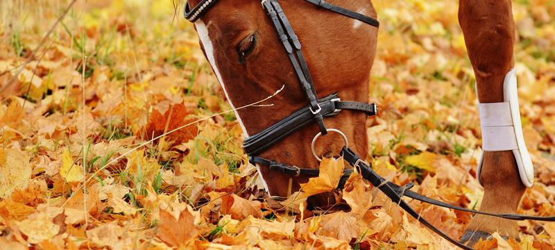 Asegura tu caballo y cumple con tus responsabilidades y las suyas