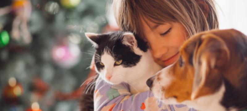 Los seguros que cubren a las mascotas