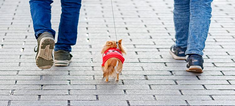 ¿Has tenido un accidente y hay mascotas involucradas?