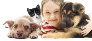 seguro animales link broker