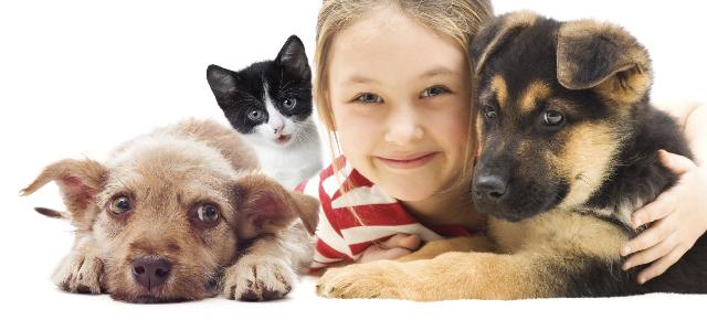 ¿Qué ventajas ofrece el seguro de animales?