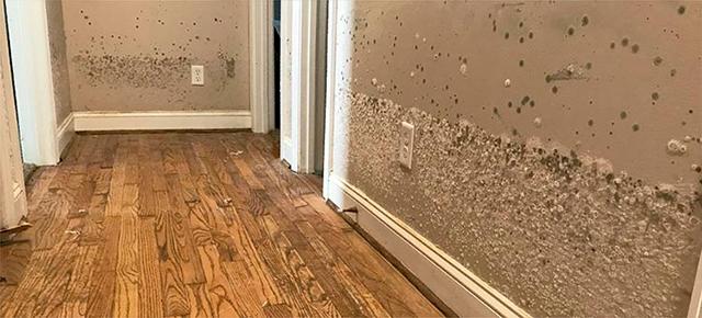 ¿Qué cubre tu seguro del hogar ante la gota fría?